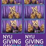 NYU Giving Day 2016